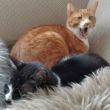 ◆プチ猫団子
