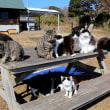 石巻市T島の猫たち 2018年2月 その9