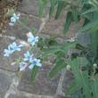 フラワーロード沿いの花々2