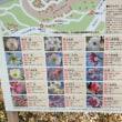 昭和記念公園の花のUP、続きます~