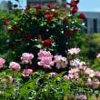 新宿御苑のバラがすごい。