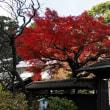 強風にグラリ!!・・北鎌倉東慶寺境内の様子