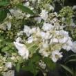 癒しの花々