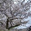 栗林公園の夜桜