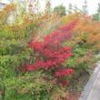 やっと秋らしく紅葉