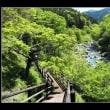 渓谷の新緑