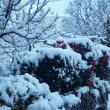17-11-21 積雪10センチ