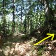 昨日琴平ハイキングコースを芝桜見ハイキング