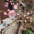 春の嵐が・・・