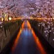 桜が咲いたわ・・・