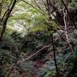 高尾山の「あかり」
