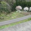 地区の桜の名所に