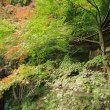 行道山の紅葉の見頃はあと10日後か ^^