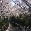 今  麻生川  🌸   kawasaki     mar2018