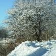 雪明け 晴天の光景を堪能