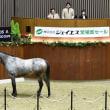 【ジェイエス・冬季繁殖馬セール2019(JS Company Winter Broodmare Sale)】が開催!(結果概要等)