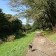野川公園で流しました