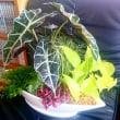 伊都菜彩で観葉植物