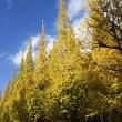 黄色い絨緞