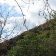 2 高松山(339m:安佐北区)登山  笹原を通って