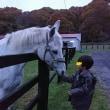 お馬と台風