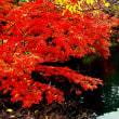 井の頭公園の紅葉物語