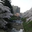 ツバメが再来、産室改装工事開始そして桜花満開とカトレア