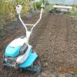 サツマイモ第二弾126本を植えつけました