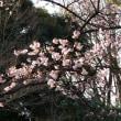 2018/2/12(月)東京・上野公園散策