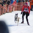人犬一体での競技大会 アニワ発