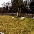 樹木葬のお墓参り
