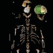 ネアンデルタール人の成長過程は、現生人類と類似!?