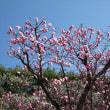 「梅は咲いたか~♪」/池上梅園