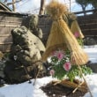 八幡さまの初雪牡丹