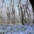 雪景色の森、雪かきのボランティア