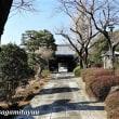 町田の古刹「久住山宏善寺」は枝垂れ梅に彩られて・・・!!