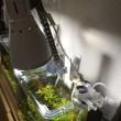 水槽〜ライト変更、水草追加〜