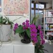 リノホーム福岡 事務所のランが今年も咲きました
