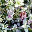 菜の花畑の小さな春