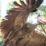 ハシビロコウの飛翔