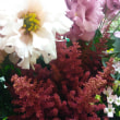 秋色~の花達