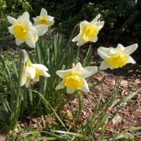 春の花咲く・墓参り