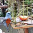 盗鳥防止フェンス ??