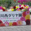 650種10万本。川西ダリヤ園(2017.10.15)その2