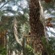 エデンの園に置かれた 『善悪を知る木』 と 『いのちの木』
