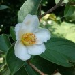凛とした白い花