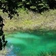 青沼の苔マット
