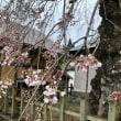 『桜情報』 NO.4