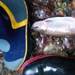 この魚は何?誰か教えてください!