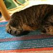 わが家の猫『ニャンチャ』の病院通い